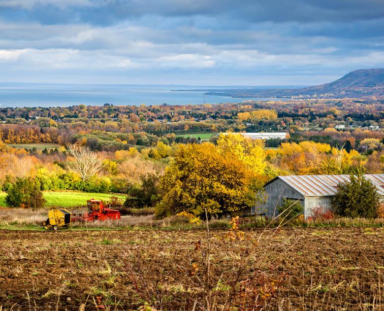 The Farm in Thornbury